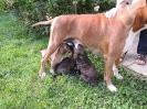 Ambra mit ihrem E-Wurf, 5 Wochen